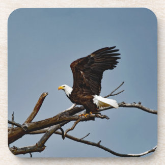 Bald Eagle Wings Up Drink Coasters