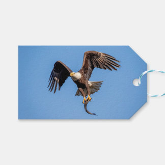 Bald Eagle with a fish Gift Tags