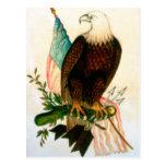 Bald eagle with flag postcards