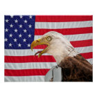 Bald Eagle with military dog tags Poster