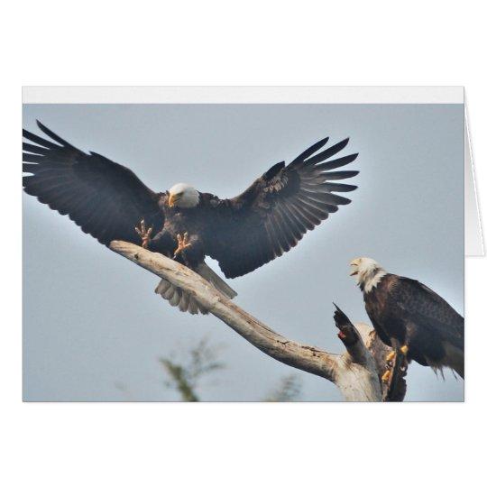 Bald Eagles Card