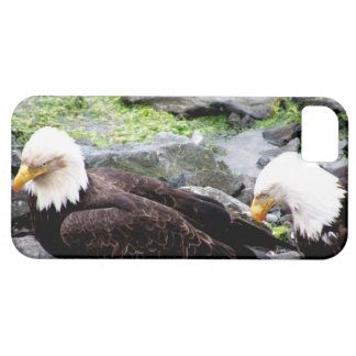 Bald Eagles  Share Meal on Haida Gwaii iphone5 Case For The iPhone 5