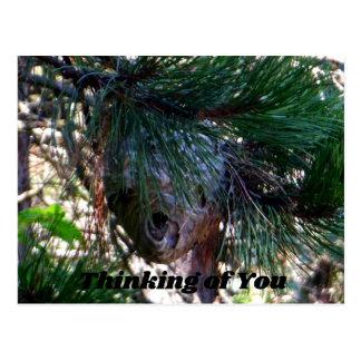 Bald Face Hornets Nest Postcard
