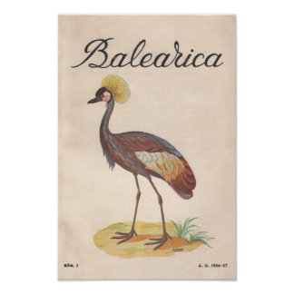 Balearica Vintage French Art Print (1956)