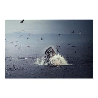 Baleine Photographie D'art