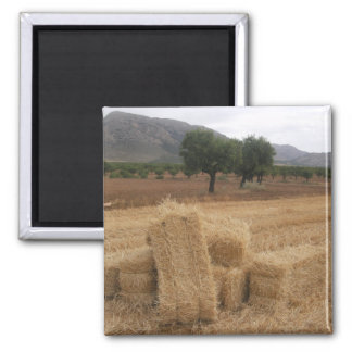 Bales & Almond Trees Square Magnet