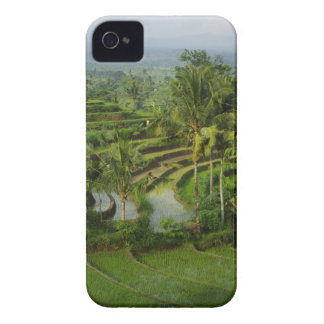Bali - Young terrace ricefields and palms Case-Mate iPhone 4 Case