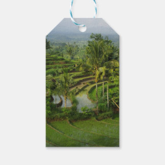 Bali - Young terrace ricefields and palms Gift Tags