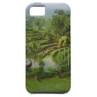 Bali - Young terrace ricefields and palms iPhone 5 Case