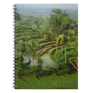 Bali - Young terrace ricefields and palms Notebook