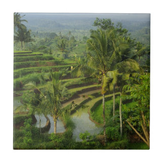 Bali - Young terrace ricefields and palms Tile