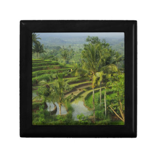 Bali - Young terrace ricefields and palms Trinket Box