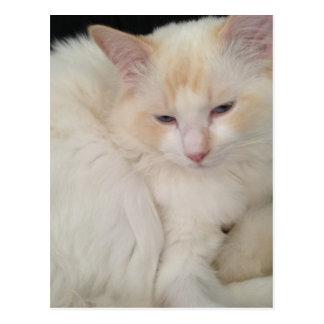 Ball of Fur Red Point Ragdoll Cat Postcard