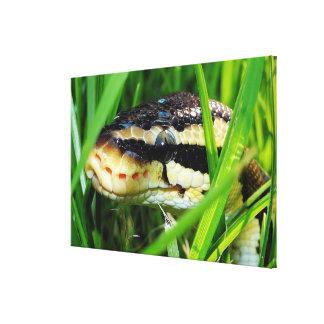 Ball python in grass canvas print