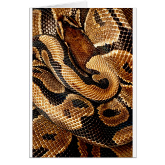 Ball Python is a work of Art Card