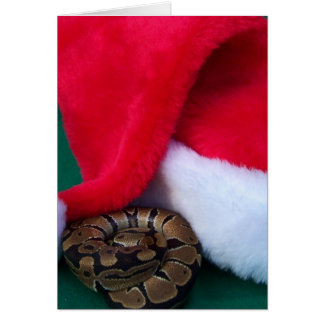 Ball Python next to Santa Hat, snake Christmas Card