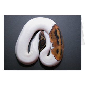 Ball Python Valentines Day Card