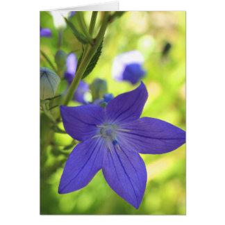 Balloon Flower Card
