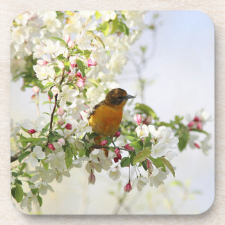Baltimore Oriole and spring blossoms Beverage Coasters