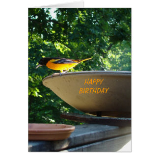 Baltimore Oriole, Birthday Card