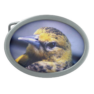 Baltimore Oriole Close-Up Belt Buckles
