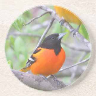 Baltimore Oriole Coaster