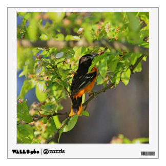 Baltimore Oriole in the Spring Wall Sticker