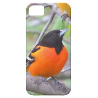 Baltimore Oriole iPhone 5 Case