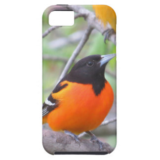 Baltimore Oriole iPhone 5 Covers