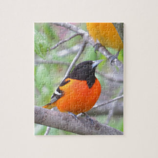 Baltimore Oriole Jigsaw Puzzle
