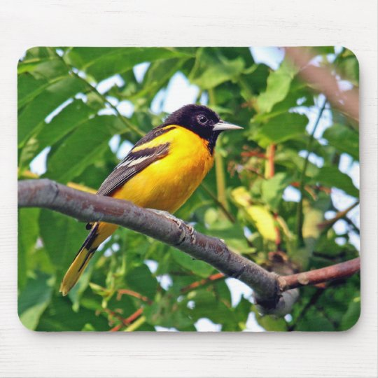 Baltimore Oriole Mousepad