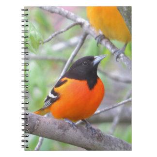 Baltimore Oriole Notebook