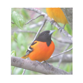 Baltimore Oriole Notepad