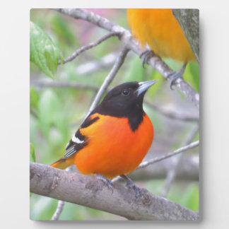 Baltimore Oriole Plaque