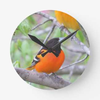 Baltimore Oriole Round Clock