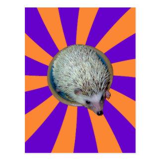 BAM! Hedgehog postcard