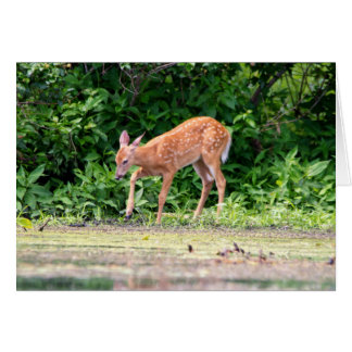 Bambi by the water greeting cards