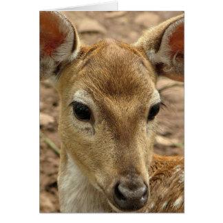 Bambi Deer Greeting Card