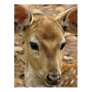 Bambi Deer Postcard