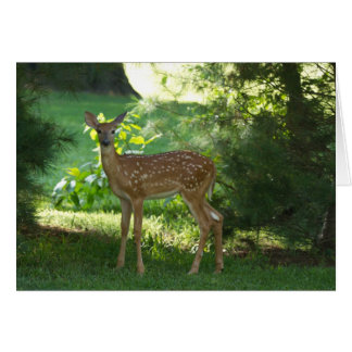 Bambi in Nauvoo Note Card