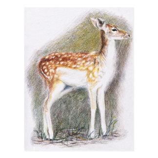 Bambi Postcard