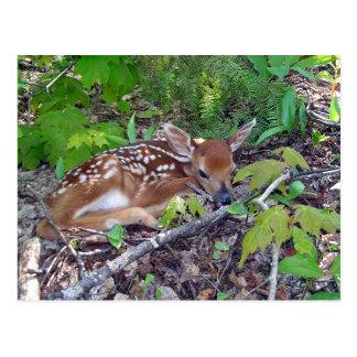 Bambi the baby roe-deer postcard