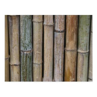 Bamboo Background Postcard