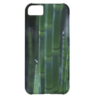 Bamboo iPhone 5C Covers