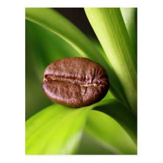 Bamboo coffee bean postcard