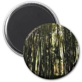 Bamboo Forest Magnet