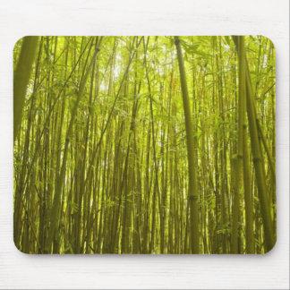 Bamboo Forest near Waikamoi Ridge Trail, North Mouse Pad