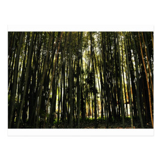 Bamboo Forest Postcard