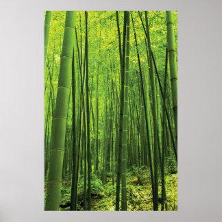 Bamboo Forest - Zen Art (Piece 2 of 3) Poster