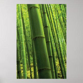 Bamboo Forest - Zen Art (Piece 3 of 3) Poster